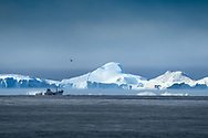 Every year, about 40,000 medium- to large-sized icebergs break off, or calve, from Greenland glaciers.