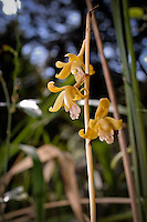 """An amazing find! """"Forma lutea"""" growing in an undeveloped block in a Central Florida neighborhood."""