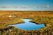 Salt marsh pools reflect the morning sky at Blakeney, North Norfolk, East Anglia.