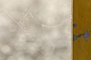Spider web on a Misty, foggy Morning