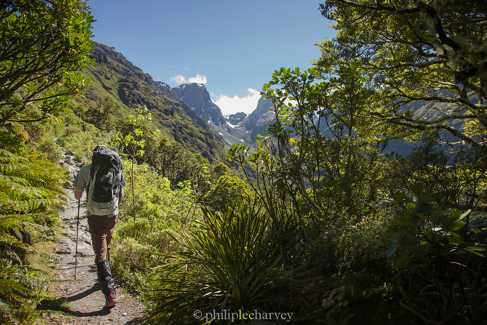Rear view of a man hiking along a footpath, Routeburn Track, South Island, New Zealand