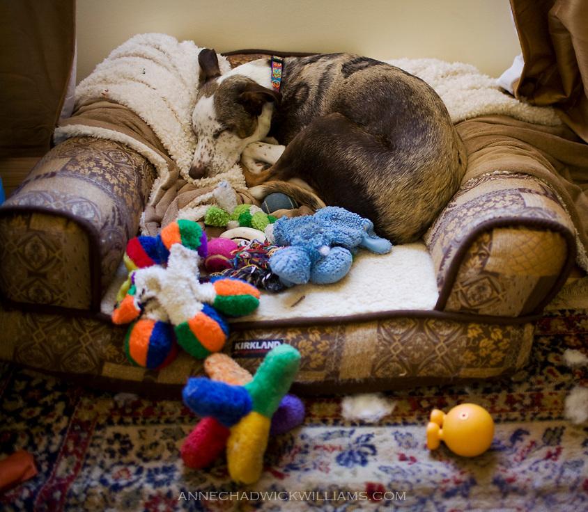 Ollie with toys on Tuesday, Feb. 8, 2011