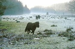 Urk, Noordoostpolder, Flevoland< Netherlands, Urkerbos