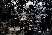 Domingos Martins_ES, Brasil...Detalhe do Rio Jucu, ao lado de trecho da antiga Rota Imperial, conhecida como Estrada Dom Pedro de Alcantra..Detail of Jacu river next to the Ancient Rota Imperial, know as Dom Pedro de Alcantara Road...Foto: LEO DRUMOND / NITRO