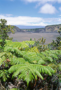 Amau fern, Kilauea Iki, HVNP, Island of Hawaii