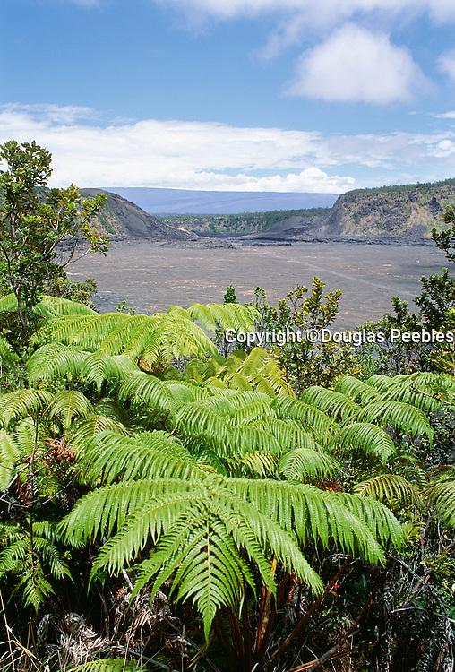 Amau fern, Kilauea Iki, HVNP, Island of Hawaii