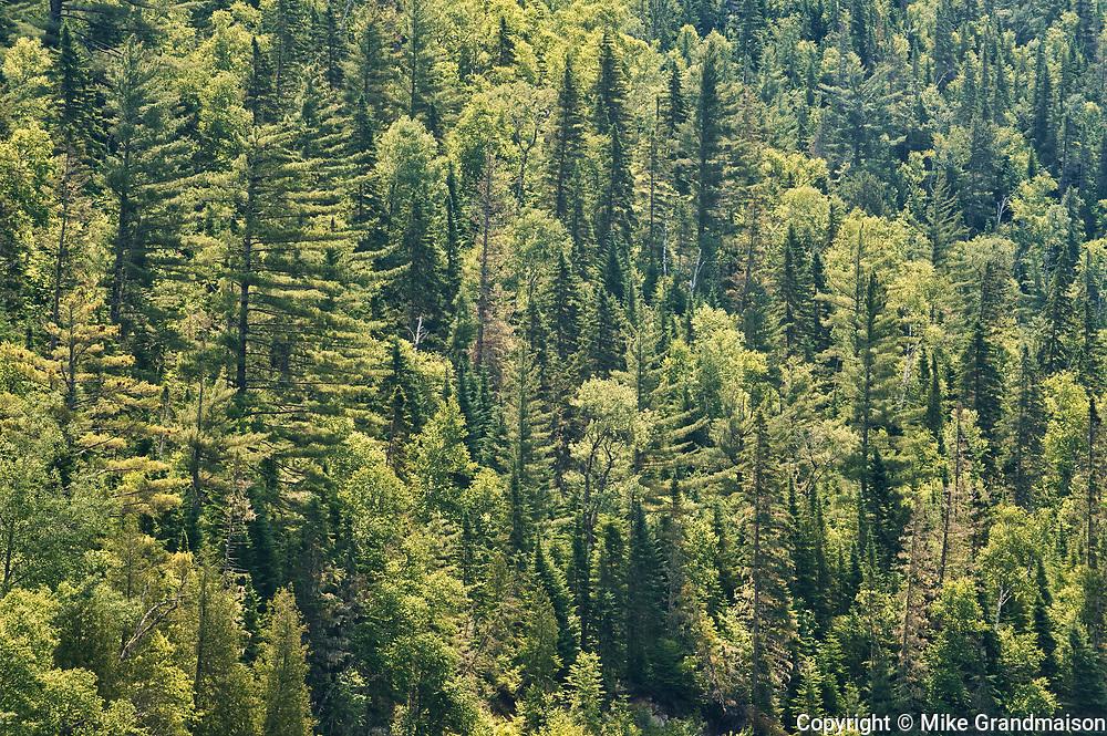 Boreal forest, Parc National du Saguenay, Quebec, Canada