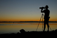 Birding the Salton Sea