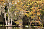 2018-11-12 Henderson Swamp