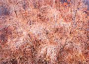 Expressive Gooding's Willow Tree, Moab, Utah