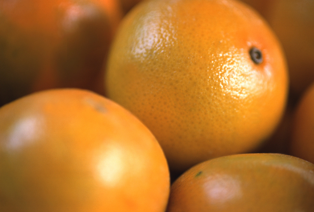Close up selective focus photograph of a group of Valencia oranges