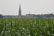 corn crop against a village tower Holland