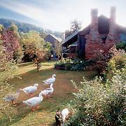 Farmhouse & Geese, Sandy Hollow, Hunter Valley, Australia