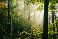 Deep in the forest early at autumn