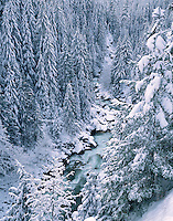 Nooksack River Valley, NW, WA, USA.Old Growth Forest, Mt. Baker National Forest..Winter snow and River canyon..Brett Baunton