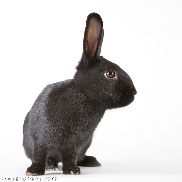 Rabbit photographed while waiting for adoption.  Pet photography by Michael Kloth.