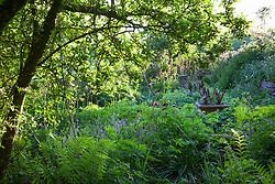 View from under the crab apple tree with Cirsium rivulare 'Atropurpureum' and geraniums