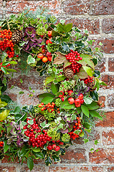 Christmas wreath hanging on old red brick wall with holly, crab apples, fir cones, ivy, guelder rose berries and hydrangeas