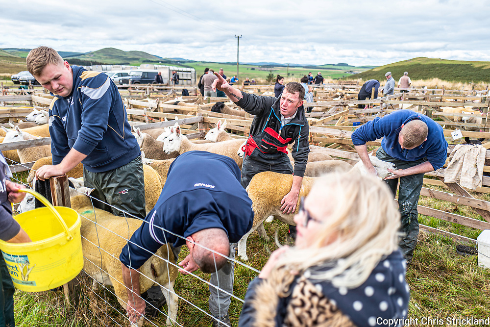 Camptown, Jedburgh, Scottish Borders, UK. 7th September 2019. Hill farmers from both sides of the Anglo Scottish Border gather at the annual Pennymuir Show in the Cheviots. Pennymuir is a former Roman camp on Dere Street just inside the Scottish Border.
