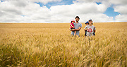 John and Halee Wepking and their children stand in wheat field that will be harvested soon at their farm in Ridgeway, Wis. The grain of the hard red spring wheat will be milled into flour at their Meadowlark Organics business. (Photo © Andy Manis)