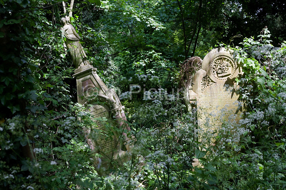 """Overgrown tomb and gravestones are covered by ivy undergrowth in Nunhead Cemetery whose deceased occupants were important members of society from the industrial age. On the left is a memorial ('With loving memory of Charlotte Catherine, the beloved wife .."""") including an angel figure that leans over at an angle, probably caused by tree roots or perhaps by vandalism during the 50s and 60s when this land was left open for youngsters to commit criminal damage to stonework and carvings. During the cemetery's annual open day, there is an opportunity for the of the cemetery 'Friends' (society) to celebrate and educate Londoners, old and young, to help preserve and conserve this historic site."""