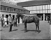 """02/08/1960<br /> 08/02/1960<br /> 02 August 1960<br /> R.D.S Horse Show Dublin (Tuesday). Mr Tommy McVeigh, Lakeview House, Carrickmannon, Co. Down with """"Carrickmannon"""" winner of the cup and 1st prize winner in the Thoroughbred Yearling Class at the Dublin Horse Show."""