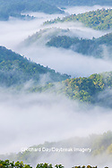 66745-04910 Early morning fog along Foothills Parkway Great Smoky Mountains National Park TN