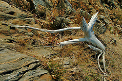 Driftwood on Maine coast Maine coast
