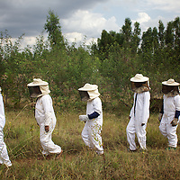 "Women from the village of Mecha, dressed in protective clothing, during a workshop at the Ambrosia beekeeping demonstration and training centre in Mecha.<br /> <br /> Harvesting honey supplements the income of small farmers in the Ethiopian region of Amhara where there is a long tradition of honey production. However, without the resources to properly invest in production and the continued use of of traditional, low-yielding hives, farmers have not been able to reap proper reward for their labour. <br /> <br /> The formation of the Zembaba Bee Products Development and Marketing Cooperative Union is an attempt to realize the potential of honey production in Amhara and ensure that the benefits reach small producers. <br /> <br /> By providing modern, high-yield hives, protective equipment and training to beekeepers, the Cooperative Union helps increase production and secure a steady supply of honey for which there is growing demand both in and beyond Ethiopia. The collective processing, marketing and distribution of Zembaba's ""Amar"" honey means that profits stay within the cooperative network of 3,500 beekeepers rather than being passed onto brokers and agents. The Union has signed an agreement with the multinational Ambrosia group to supply honey to the export market. <br /> <br /> Zembaba Bee Products Development and Marketing Cooperative Union also provides credit to individual members and trains carpenters in the production of modern hives. <br /> <br /> Photo: Tom Pietrasik<br /> Mecha, Amhara. Ethiopia<br /> November 17th 2010"
