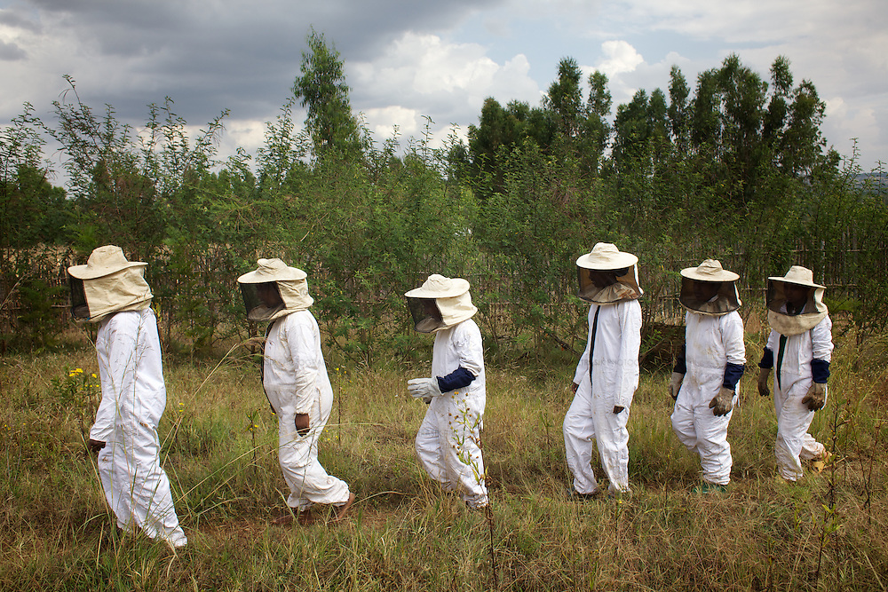 """Women from the village of Mecha, dressed in protective clothing, during a workshop at the Ambrosia beekeeping demonstration and training centre in Mecha.<br /> <br /> Harvesting honey supplements the income of small farmers in the Ethiopian region of Amhara where there is a long tradition of honey production. However, without the resources to properly invest in production and the continued use of of traditional, low-yielding hives, farmers have not been able to reap proper reward for their labour. <br /> <br /> The formation of the Zembaba Bee Products Development and Marketing Cooperative Union is an attempt to realize the potential of honey production in Amhara and ensure that the benefits reach small producers. <br /> <br /> By providing modern, high-yield hives, protective equipment and training to beekeepers, the Cooperative Union helps increase production and secure a steady supply of honey for which there is growing demand both in and beyond Ethiopia. The collective processing, marketing and distribution of Zembaba's """"Amar"""" honey means that profits stay within the cooperative network of 3,500 beekeepers rather than being passed onto brokers and agents. The Union has signed an agreement with the multinational Ambrosia group to supply honey to the export market. <br /> <br /> Zembaba Bee Products Development and Marketing Cooperative Union also provides credit to individual members and trains carpenters in the production of modern hives. <br /> <br /> Photo: Tom Pietrasik<br /> Mecha, Amhara. Ethiopia<br /> November 17th 2010"""