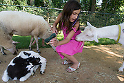 In Dordrecht wil een geit de jurk van een meisje eten. Het meisje verzorgt de dieren in de kinderboerderij van Natuur- en milieucentrum Weizigt.<br />