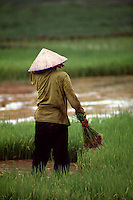 moving rice from dry to wet paddies<br /> <br /> Laos<br /> <br /> photo by Owen Franken