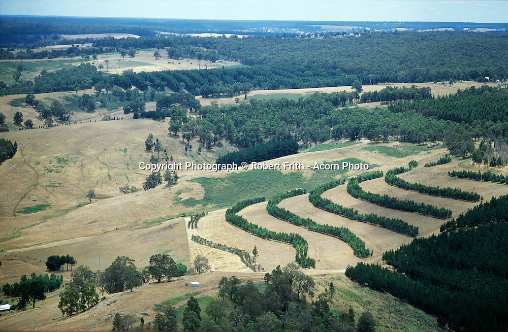 Aerial view of a blue gum agroforest