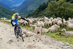 13-09-2017 FRA: BvdGF Tour du Mont Blanc day 4, Trient<br /> Van Chamonix naar Trient. <br /> Bergen, wolken, landschap, sneeuw, natuur, schapen, Manu