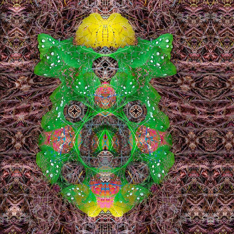 """Gingko and Betula Synthesis"", derivative image created from a photo of gingko and birch leaves, autumn, November, Point Defiance Park, Tacoma, Washington, USA"