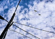 """Two airplanes fly overhead, in a windswept cloudy blue sky, framed by powerlines   Each 252-piece photo puzzle comes in a sturdy, finished cardboard box and measures 10"""" x 14"""" when complete"""