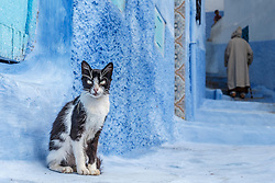 Cat in blue alley with man in djellaba walking past, Chefchaouen, Morocco