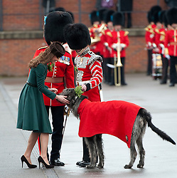 © London News Pictures. 17/03/2012. Aldershot, UK. The Duchess of Cambride CATHERINE (KATE) MIDDLETON presenting a traditional sprig of shamrock to Conmeal the Irish Woolfhound, the regimental mascot for the 1st Battalion Irish Guards at Mons Barracks in Aldershot, Hampshire, UK,  on Saint Patrick's Day, March 17th, 2012.  Photo credit : Ben Cawthra/LNP.