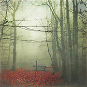 Misty December morning in a park. Texturized photograph<br /> Prints: http://www.500pxart.com/photo/55446582