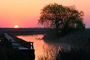The morning sun illuminates a marsh in Point Pelee NP, Ontario, Canada.