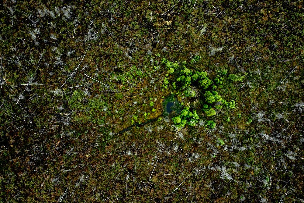 Boreal Forest of James Bay, Quebec