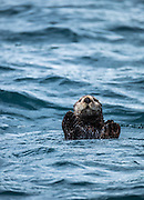 We absolutely fell in love with the sea otters here. They are so funny.
