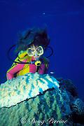 diver examines head of star coral, Montastrea annularis, being killed by black band disease, caused by Phormidium corallyticum and other  cyanobacteria, Bahamas ( Western Atlantic Ocean )