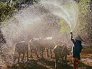 Vietnam Images-People and flock-Tay Ninh. hoàng thế nhiệm