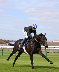 Elarqam ridden by Jim Crowley on the gallops during day one of The Bet365 Craven Meeting at Newmarket Racecourse, Newmarket.