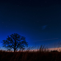 Stars shine in the night sky as a 300 year old Burr oak tree towers from the prairie