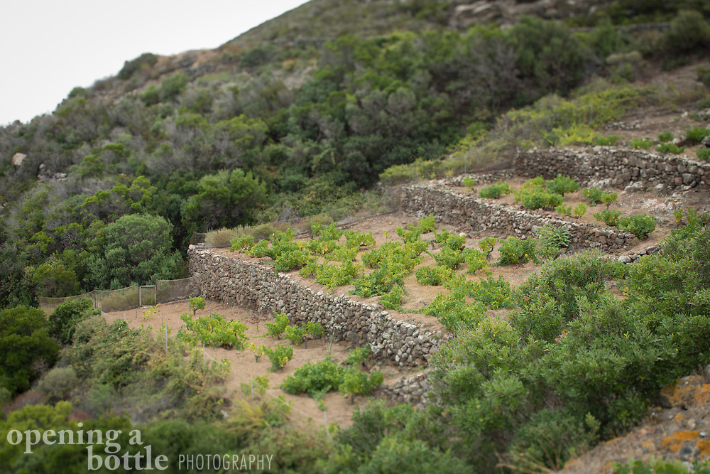 The terraced vineyards on the island of Pantelleria where Zibibbo is grown for a white wine and for a well-known dessert wine called Passito di Pantelleria.