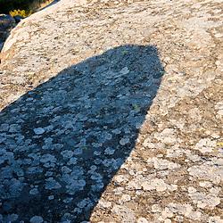 Lichen on a boulder near the summit of Mount Monadnock in New Hampshire's Monadnock State Park.