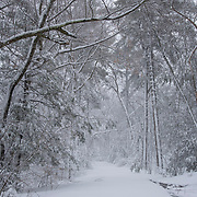 Fresh snow covers a road in a reservation in Wakefield, MA