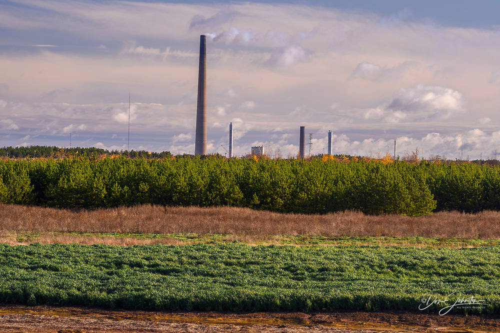 Re-greened tailings with grasses and planted pine trees, Greater Sudbury- Copper Cliff. Vale Central Tailings Facility- P Area, Ontario, Canada